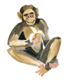 Watercolor illustration of a monkey Stock Photos