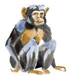 Watercolor illustration of a monkey. Marmoset stock illustration