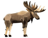 Watercolor illustration of a moose Stock Images