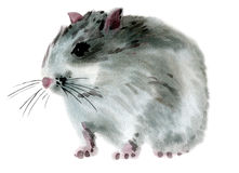 Watercolor illustration of a mouse Stock Photography