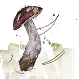 Watercolor illustration of a mushroom. Stock Photography