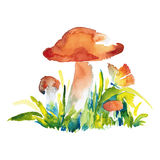 Watercolor illustration of mushrooms. Watercolor colored illustration of orange-cap boletus mushrooms with butterfly Stock Photography