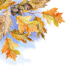 Watercolor illustration with oak leaves Royalty Free Stock Photography