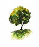 Watercolor illustration of an oak tree Royalty Free Stock Photography