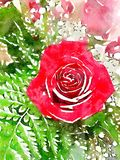 Watercolor Illustration Of Bouquet Of Flowers Featuring A Red Rose Royalty Free Stock Photos