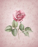 Watercolor Illustration Of Rose Flower Stock Images