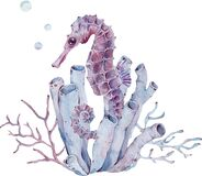 Free Watercolor Illustration Of Seahorse By The Tube Sponge And Seaweed. Sea Life. Hand-drawn Art. Stock Photo - 183784280