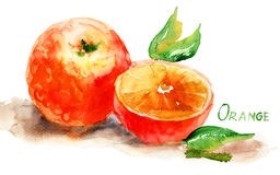 Watercolor illustration of Orange. S with leaves Stock Photography