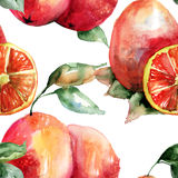 Watercolor illustration of Oranges Royalty Free Stock Photos