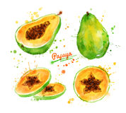 Watercolor illustration of papaya Royalty Free Stock Image
