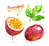 Watercolor illustration of passionfruit Royalty Free Stock Image