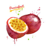 Watercolor illustration of passionfruit Stock Image
