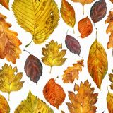 Watercolor illustration, pattern. Autumn leaves on a white background. stock photography