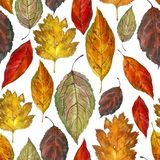 Watercolor illustration, pattern. Autumn leaves on a white background. stock photo