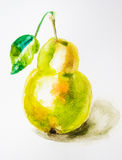 Watercolor illustration of pear. Watercolor illustration of green pear Stock Image
