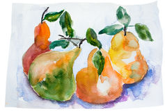 Watercolor Illustration of pear Royalty Free Stock Photos