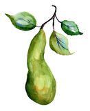 Watercolor Illustration of pears Stock Photography