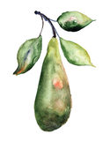 Watercolor Illustration of pears Royalty Free Stock Photos