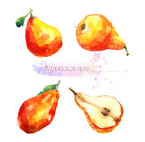 Watercolor illustration of pears Stock Images