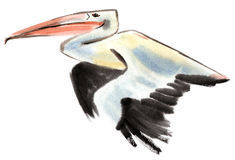 Watercolor illustration of Pelican Stock Image