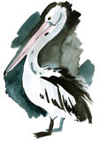 Watercolor illustration of Pelican in white background. Stock Image