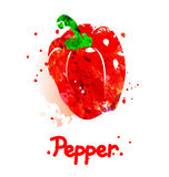 Watercolor illustration of pepper Royalty Free Stock Images