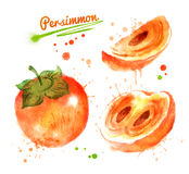 Watercolor illustration of persimmon Royalty Free Stock Images