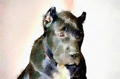 Watercolor illustration of pet dog Royalty Free Stock Images