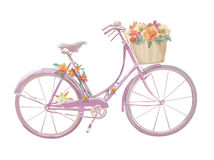 Watercolor illustration of a pink bicycle with. Flowers, vector royalty free illustration