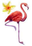 Watercolor illustration of pink flamingo Royalty Free Stock Photo