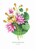 Watercolor Illustration of Pink Lotus. Vector. Floral background Stock Photography