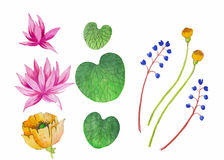 Watercolor Illustration Pink Lotus. Vector. Floral background Stock Photo