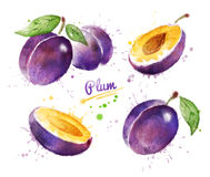 Watercolor illustration of plum. Whole and half with and without seed and paint smudges and splashes Stock Image