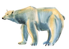 Watercolor illustration of polar bear in white background. Stock Images