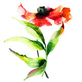 Watercolor illustration of  poppy flower Royalty Free Stock Photos
