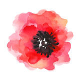 Watercolor illustration of a poppy on a white background. royalty free stock photos