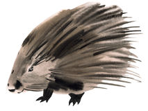 Watercolor illustration of a porcupine Royalty Free Stock Images