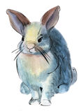 Watercolor illustration of a bunny Royalty Free Stock Images