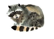 Watercolor illustration of a raccoon Stock Image