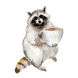 Watercolor illustration racoon with coffee mug, animal character isolated on white background. Racoon with coffee mug, animal character isolated on white Royalty Free Stock Images