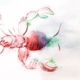 Watercolor illustration of red crawfish Royalty Free Stock Photo
