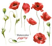 Watercolor illustration - set of red handdrawn poppies vector illustration