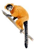 Watercolor illustration of a red vari lemur in white background. Stock Images
