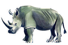 Watercolor illustration of Rhino in white background. Royalty Free Stock Image