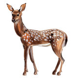 Watercolor illustration of roe deer in white background. Stock Image