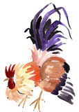 Watercolor illustration of a rooster in white background. Royalty Free Stock Photos