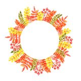 Watercolor illustration of a round frame of autumn leaves of red orange hues with rowan branches stock illustration