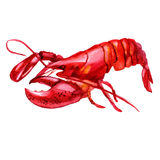 Watercolor illustration of seafood. Crayfish Stock Images