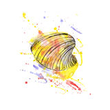 Watercolor illustration of seashells. Vector Royalty Free Stock Image