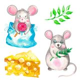 Watercolor illustration of a set of animal mice on a white isolated background Additional elements green branch and a piece of stock illustration